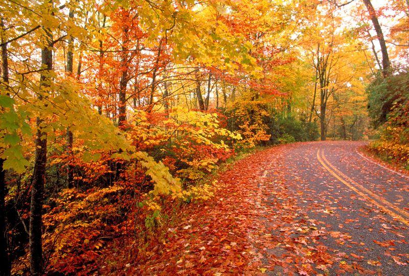 Fall-road-1