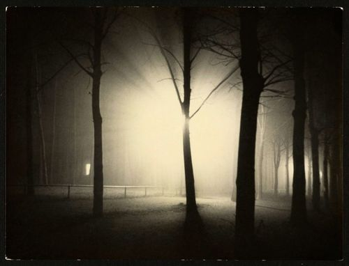 Night-view-of-trees-and-streetlamp-burgkc3bchnauer-allee-dessau-1928