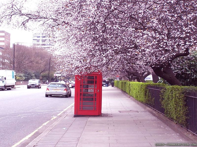 Telephone-box-spring-in-london-wallpapers-1024x768