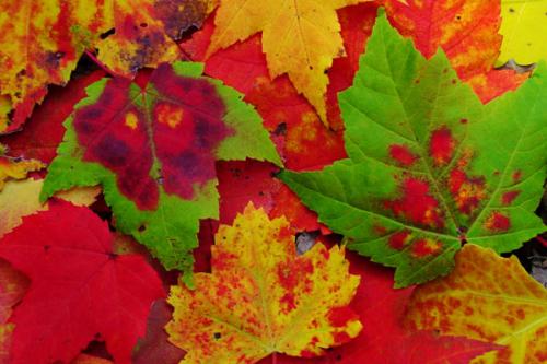 Family-foliage-topic-ttd-fall