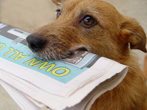 Daily-news-dog-with-newspaper-picture-id139397264